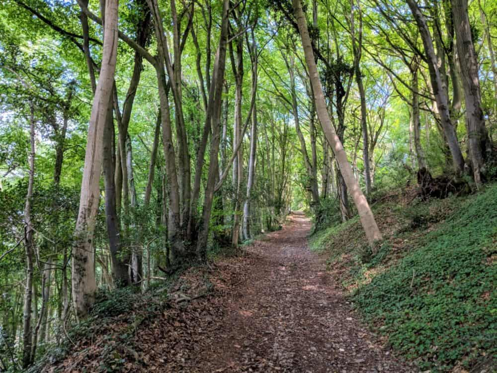 Trail-through-the-trees-Cotswold-Way-day-4-1000×750